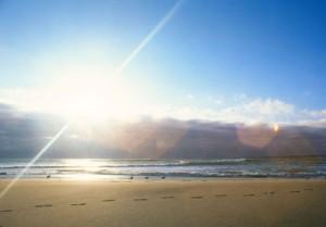 Birds and bright sun on beach